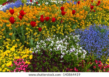 Flower bed with red tulips and beautiful blossoms - stock photo