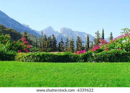 Flower beds on a background of mountains - stock photo