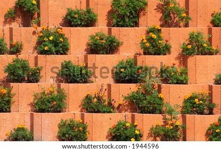Flower beds on a terraced wall - stock photo
