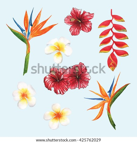 Flower Bird of paradise  ,Frangipani Hibiscus tropical flora beautiful watercolour  botany spring summer Hawaii beach , design object print ,object isolated - stock photo