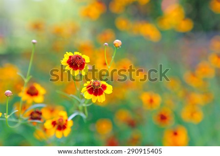 flower blooming in the garden - stock photo