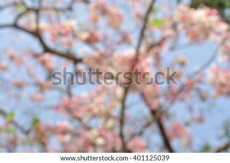 Flower blossom blur background, Pink cassia, Pink tree - stock photo