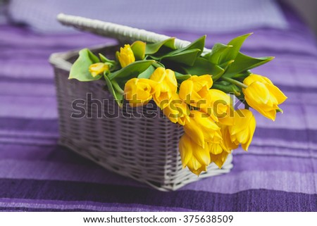 Flower bouquet of yellow tulips in a wicker basket on a purple background