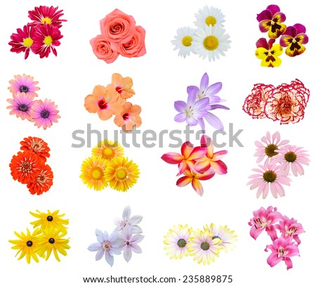 Flower bouquet: seasonal various Flowers isolated - stock photo
