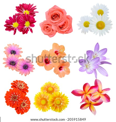 Flower bouquet: seasonal various Flowers isolated on White Background