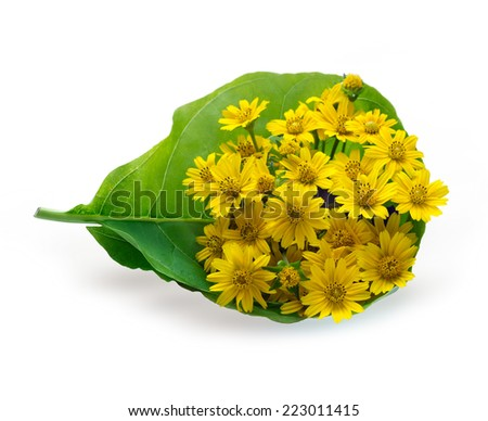 Flower bouquet yellow in green leaf on white background - stock photo