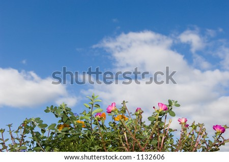 Flower Box and Sky - stock photo