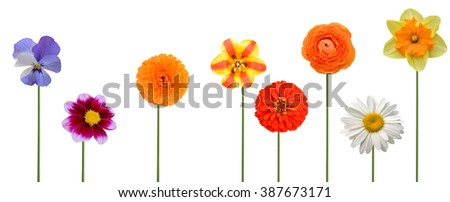 Flower branch: colorful flowers