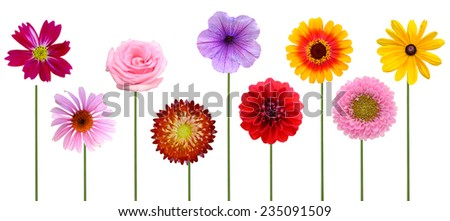 Flower branch: colorful spring flowers  - stock photo
