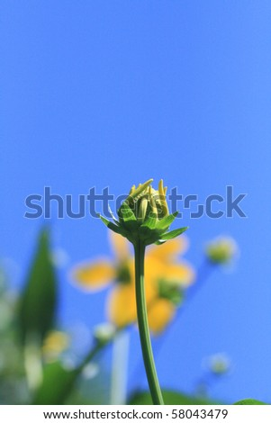 Flower bud on a sunny summer day in Wisconsin