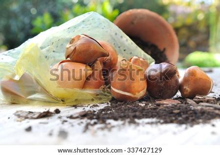 flower bulbs in bag on garden table  - stock photo