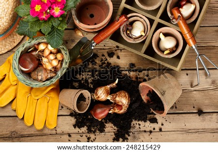 Flower bulbs, pots on wooden table  - stock photo
