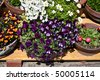 Flower bunch - stock photo