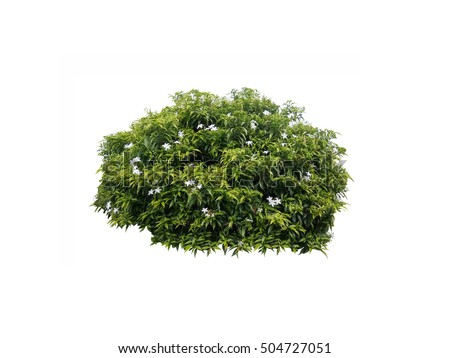 flower bush tree ,white flower and green bush tree isolated
