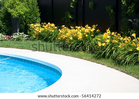Flower by the pool - stock photo