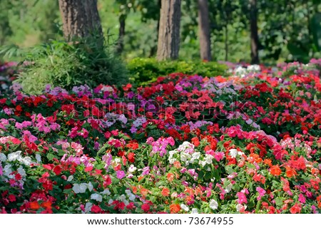 flower carpet in the zoo of chiang mai - stock photo