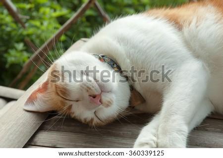 Flower cat sleeping on the floor  - stock photo