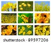 Flower collage , with yellow flowers. - stock photo
