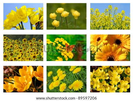 Flower collage , with yellow flowers.