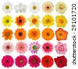 Flower collection isolated on white background - stock photo