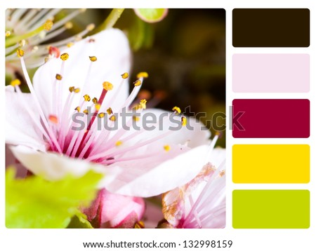 Flower color palette with complimentary swatches. - stock photo