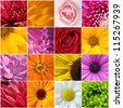 Flower color wallpaper - stock photo