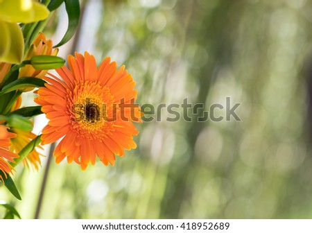 Flower composition on the blured green background. Composition is made of gerber and lilies - stock photo