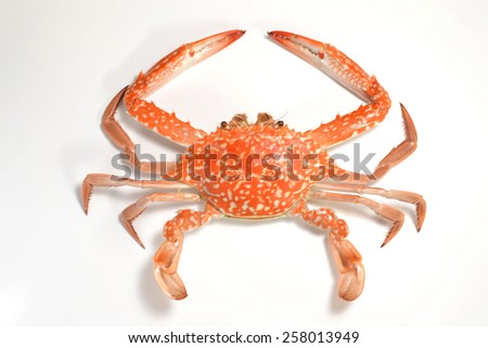 Flower crab isolated on a white background - stock photo