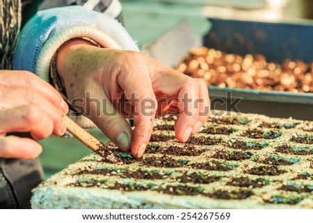 Flower cultivation greenhouses seedling - stock photo