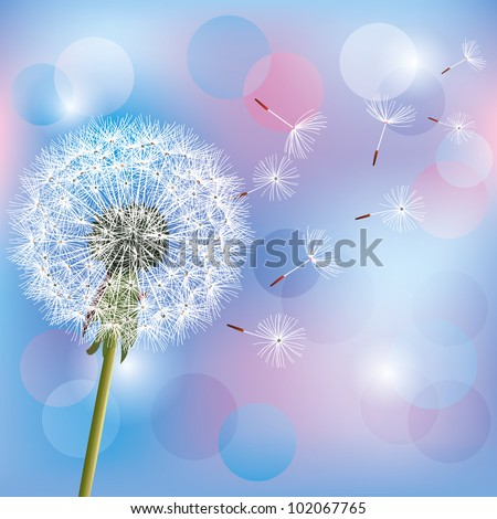 Flower dandelion, spring flower on light blue - pink background. Place for text