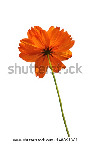 Flower elegance isolate on white background