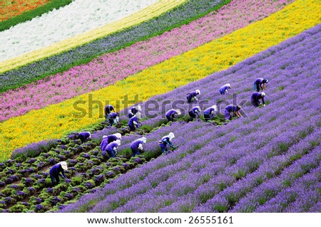 flower farmers - stock photo