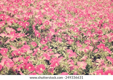Flower field - stock photo