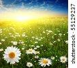 Flower field and beautiful sunset. - stock photo