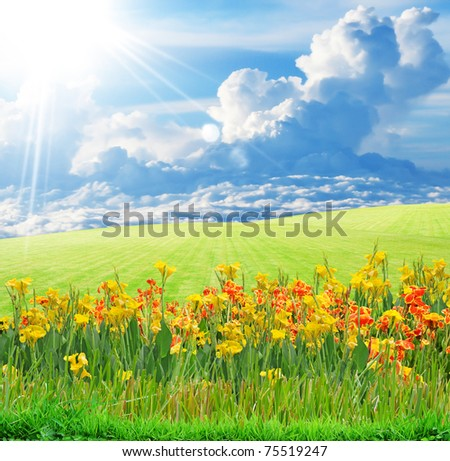 flower field and blue sky - stock photo