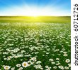 Flower field and blue sky with sun. - stock photo
