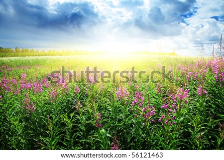 Flower field and sun. - stock photo
