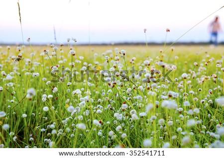 Flower field at sunset - stock photo