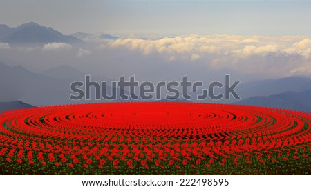 flower field at sunset for adv or others purpose use - stock photo