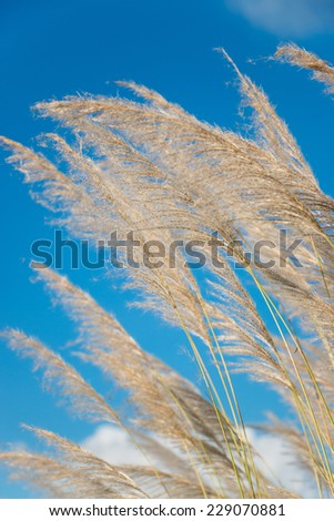 Flower field,blue sky  - stock photo