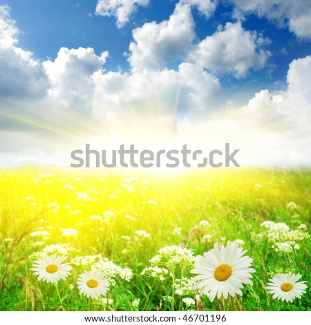 Flower field ,blue sky and sun. - stock photo