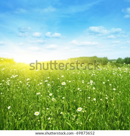 Flower field,blue sky and sunlight. - stock photo