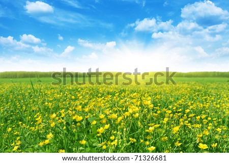 Flower field in spring time.