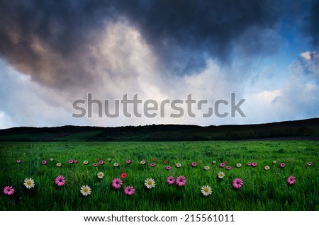 Flower field in the night.