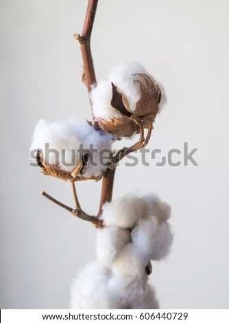 cotton plant jewish singles The latest pc gaming hardware news, plus expert, trustworthy and unbiased buying guides.