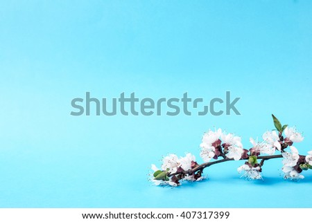 Flower. Floral spring leaf. Beautiful fresh branch with buds. Plant with petals in bloom, blossom. Beauty seasonal nature blooming in april. Delicate tree bunch on blue background. - stock photo