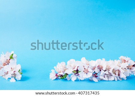 Flower. Floral spring leaf. Beautiful fresh branch with buds. Plant with petals in bloom, blossom. Beauty seasonal nature blooming in april. Delicate tree bunch on bluee background. - stock photo
