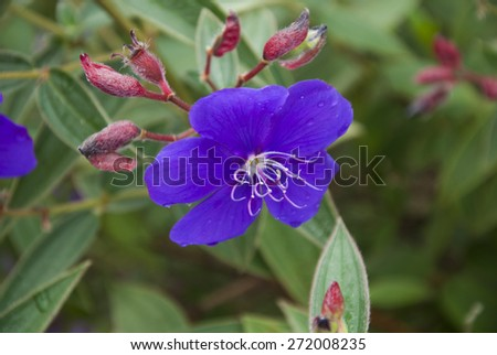 flower, flowers, spring, wild, purple, nature, plant, detail, macro, bloom, petal, summer, green, field, natural, background, white, fresh, garden, floral, flora, botany, beauty, decoration, leaf - stock photo