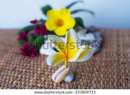 Flower frangipani on the seashell - stock photo