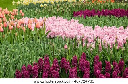 Flower garden - stock photo